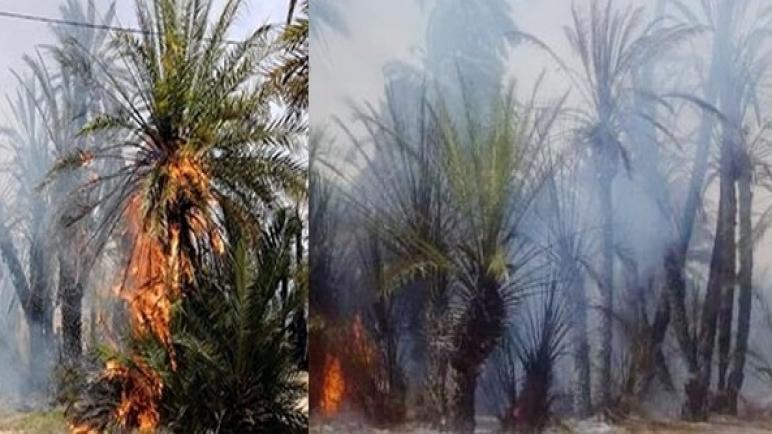حريق يأتي على أزيد من 800 نخلة بواحة تيغمرت