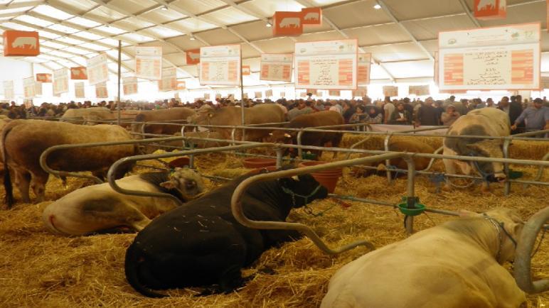 """مكناس…إلغاء تنظيم الدورة 15 للمعرض الدولي للفلاحة بسبب فيروس """"كورونا"""""""